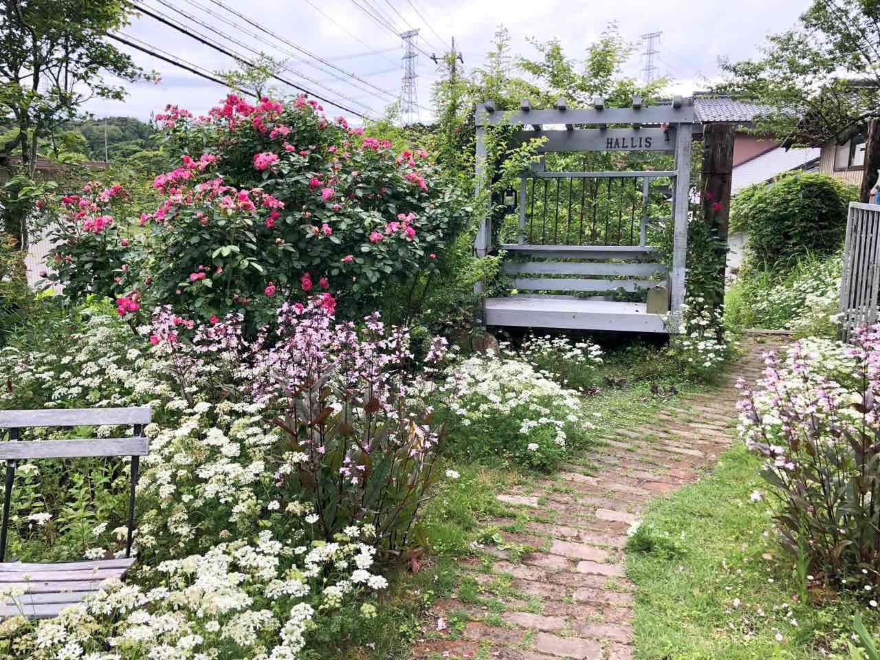 ハリスカフェの初夏のお庭