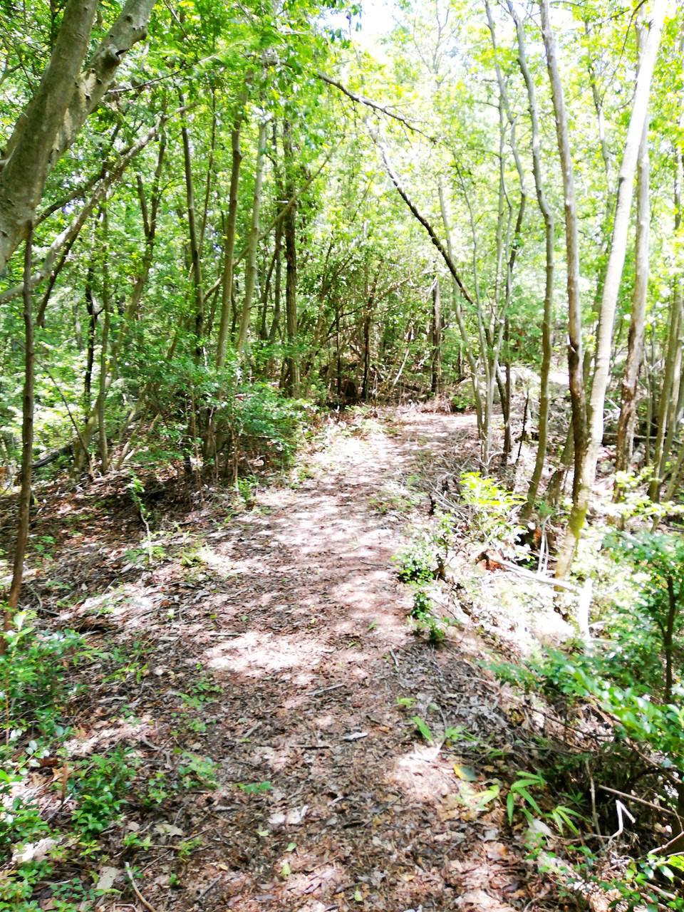 紅岩までの林道
