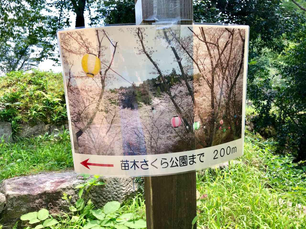 中津川の苗木城さくら公園