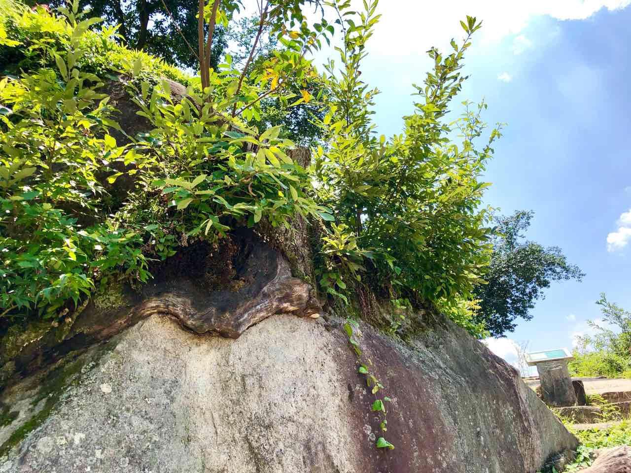 中津川の苗木城跡岩の木